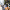 Serik'te 3 noktada orman yangını